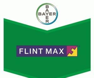 flin-max-bayer.jpg