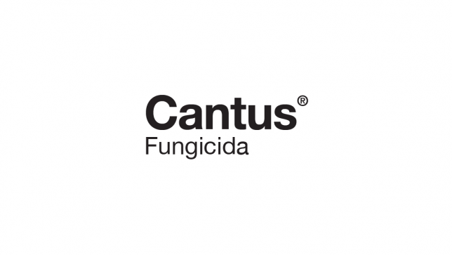 cantus-logo.png