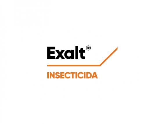 exalt-logo.jpg