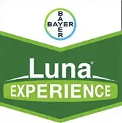 luna-experience-logo_1.png