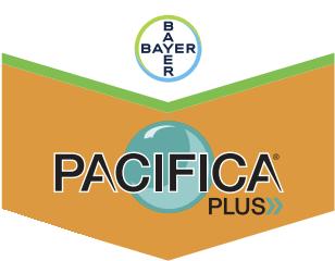 pacifica-plus-logo_1.png