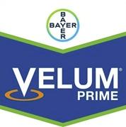 velum-prime-logo_1.png